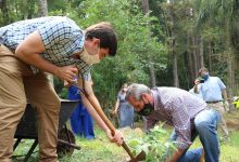 Photo of What Is Reforestation?